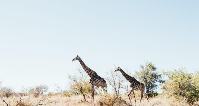 Zambia an ideal safari destination